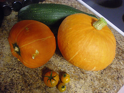 Kuri Squash with Yellow Tomatoes and Zucchini